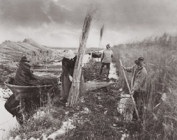 During The Reed Harvest